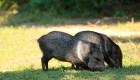 Mira estas especies de animales desconocidas en Santa Fe