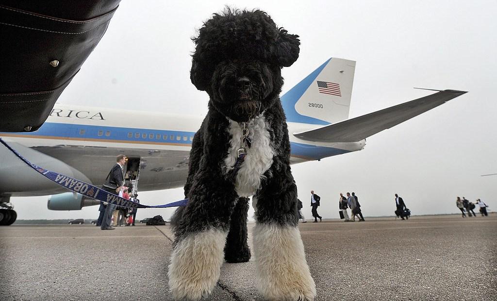Bo, Obama