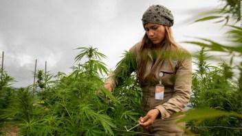 Cannabis empresa Colombia bolsa EE.UU.