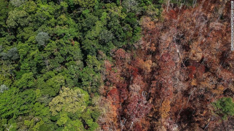 Amazonas incendios deforestación