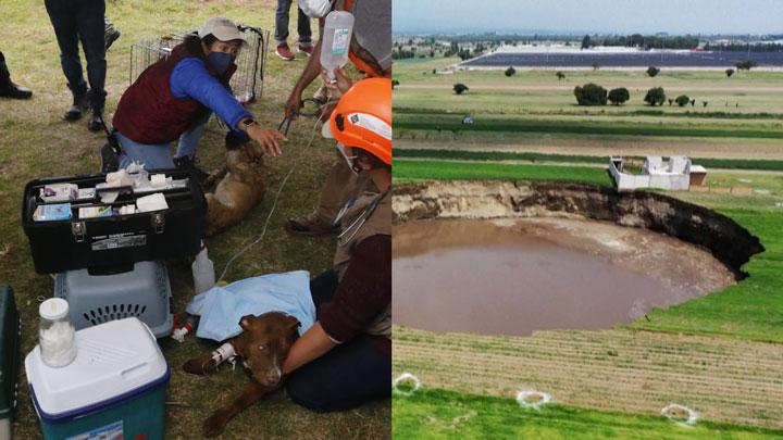 Rescatan perritos socavón