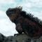 Animales en islas Galápagos retoman parte de su hábitat