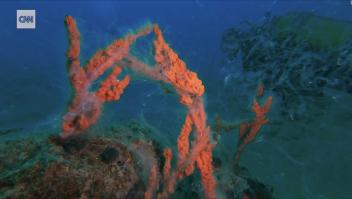 Mucílago marino amenaza con extinguir la vida submarina