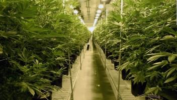 Amazon anuncia apoyo a la legalización de marihuana