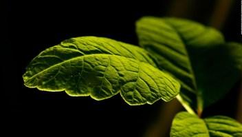 La NASA estudia cómo crecen las plantas en el espacio