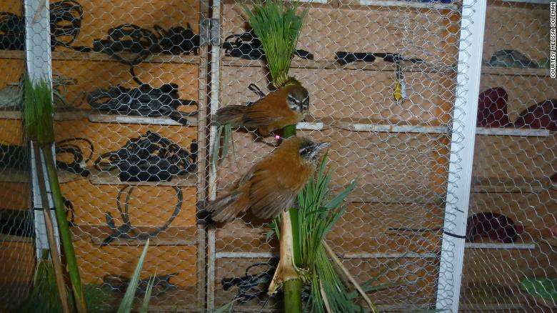 pájaro dúo