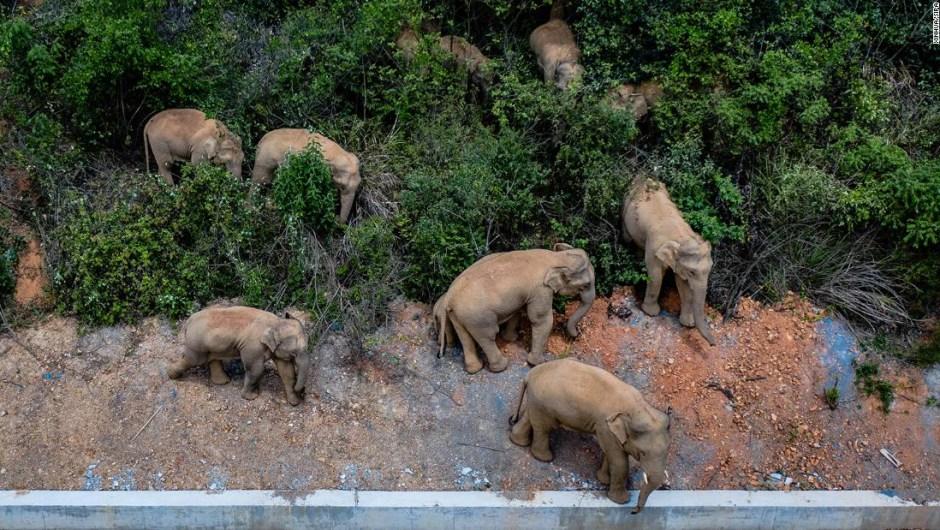 Elefantes manada china