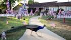 Pavos reales crean problemas en el condado Los Ángeles