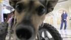 Concurso de perros para animar a adultos mayores