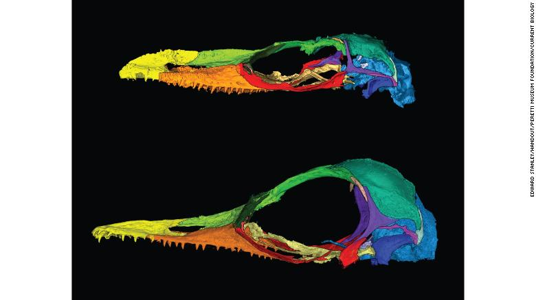 dinosaurus kadal kecil