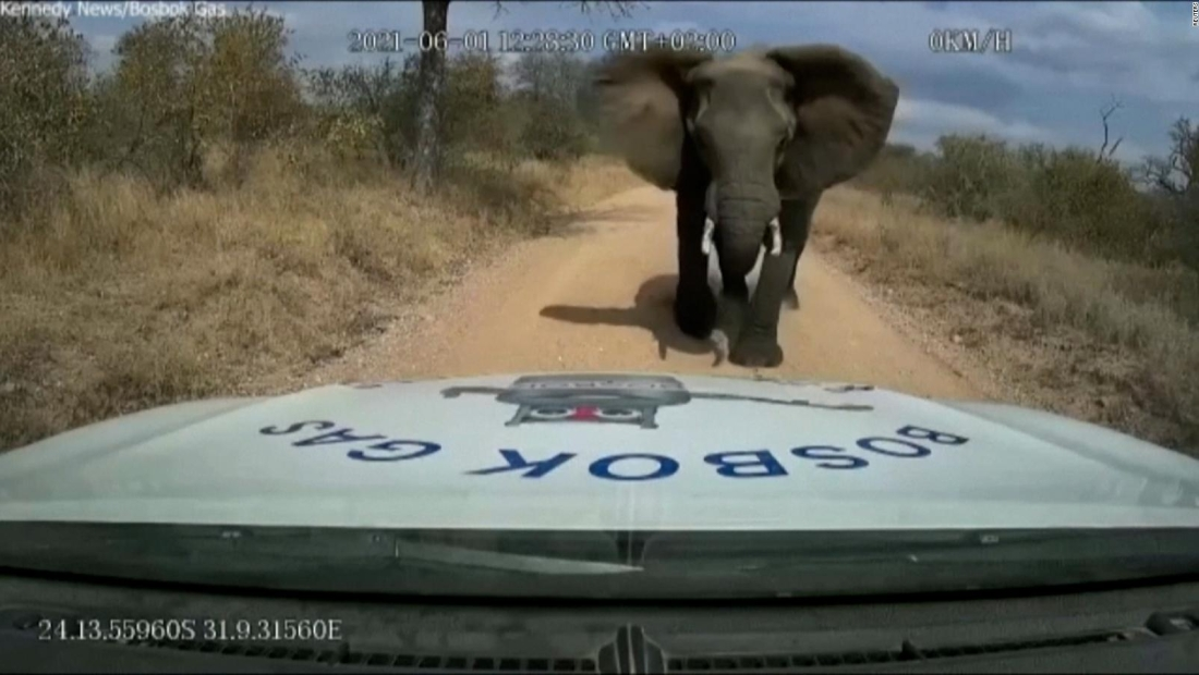 Hombre registra el ataque de un elefante a su camioneta