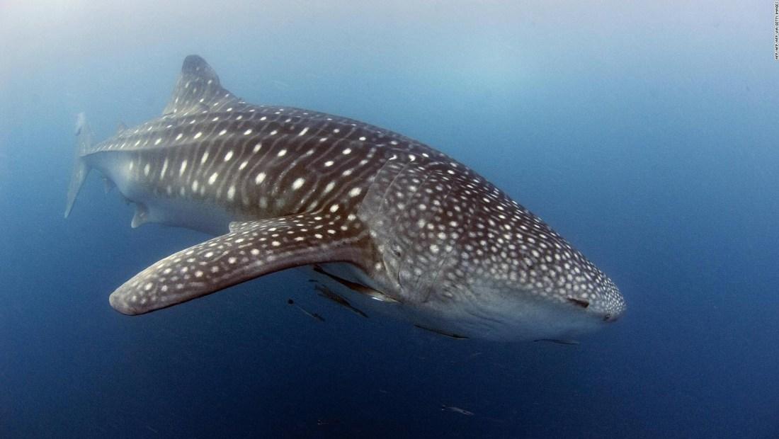 Las ballenas caminaban por la Tierra hace millones de años