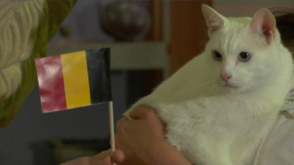 El gato que predice a los ganadores de la Eurocopa