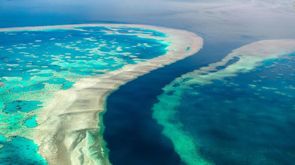 La Gran Barrera de Coral enfrenta a la ONU y a Australia