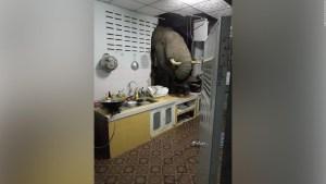 Elefante busca comida en casa de una mujer en Tailandia