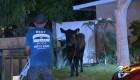 Manada de vacas escapa de matadero y desata caos en EE.UU.