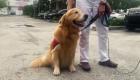 Este perro da alivio a familias del derrumbe en Miami