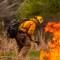 Ola de calor: expertos señalan al cambio climático