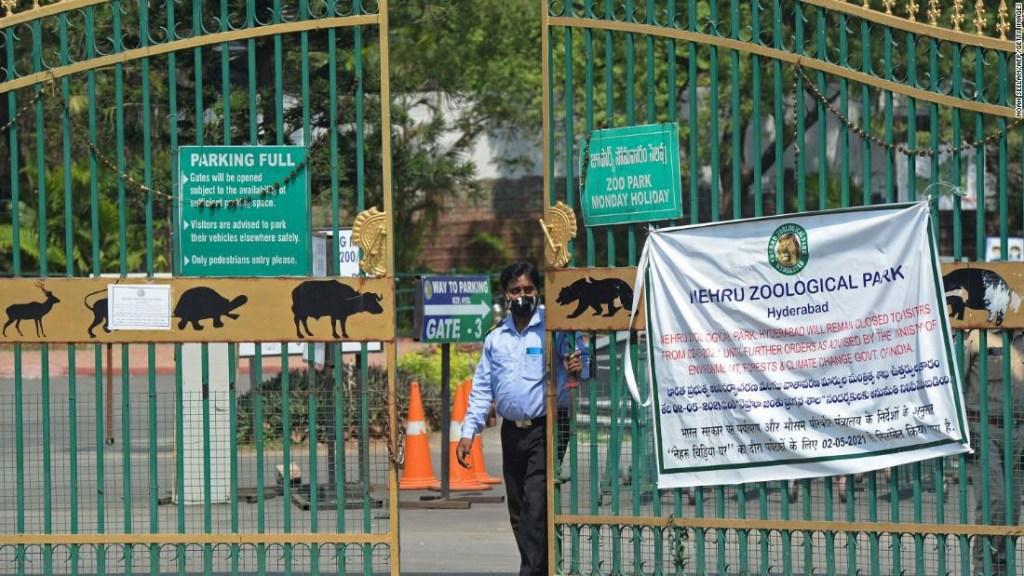 animales covid India