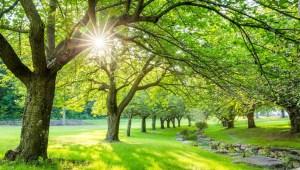 El verano es la temporada que nos recuerda que debemos cobrar vida