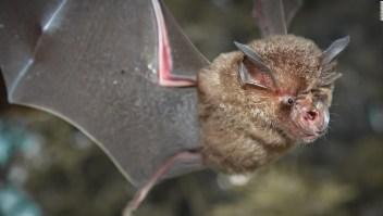 Nuevos coronavirus murciélagos investigadores chinos