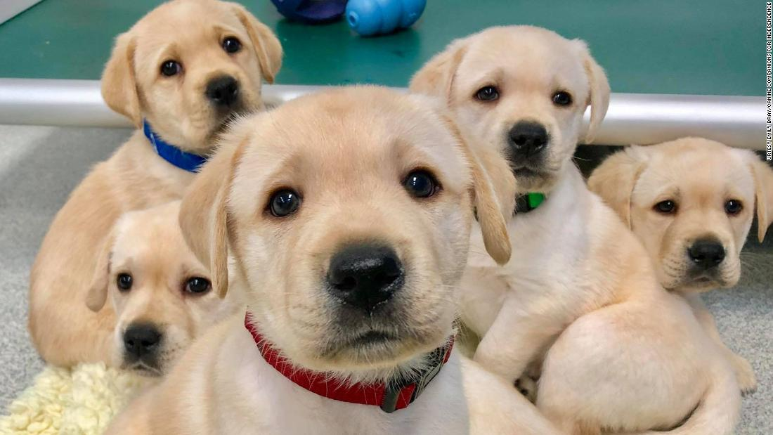 Los cachorros de perro nacen listos para interactuar con las personas, encuentra un estudio