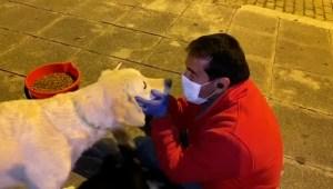 ferchy-perros-covid-19-bolivia.jpg