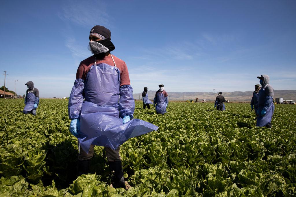 Trabajador agrícola temporal H-2A