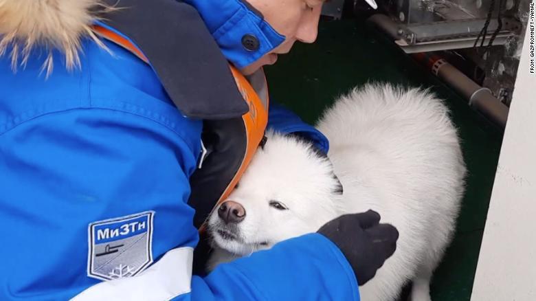 rescate-perro-ártico