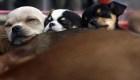 Mira el entrenamiento de perros para personas con ceguera