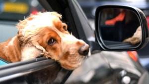 Tu perrito comprendería lo que sientes, según estudio