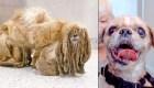 Perro oculto en revoltijo de pelo encontró una familia