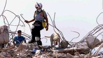 Se han buscado mascotas en el derrumbe de Miami