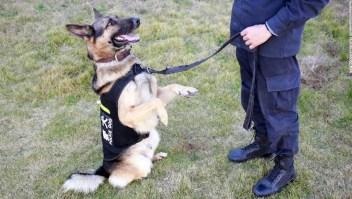 Policía de China subasta perros