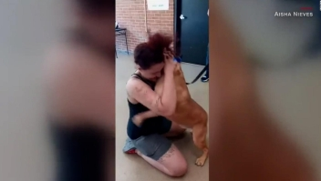 Mira el reencuentro de una mujer con su perro perdido