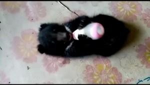 Este pequeño oso fue salvado de tortura y se prepara para ser libre