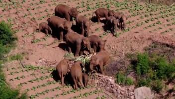 Conmovedor encuentro entre tres elefantes