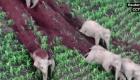 Captan a elefantes deslizándose por una colina