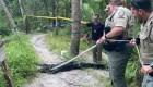 Un ciclista cae al agua y es herido por un caimán