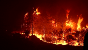 Más de 520.000 hectáreas se han perdido por incendios en EE.UU.