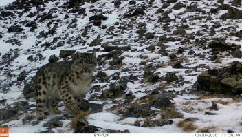 Mira las primeras imágenes de este raro leopardo en años