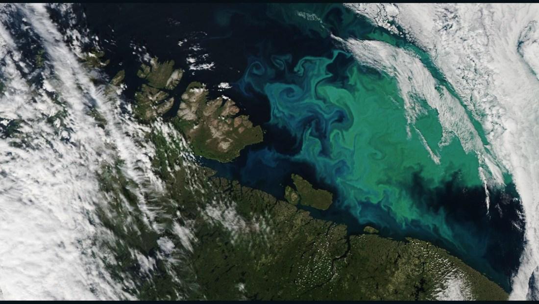 Mira las poblaciones de fitoplancton desde el espacio