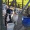 Día del perro callejero: por qué adoptar una mascota