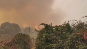 Incendios forestales devastan sur de Europa