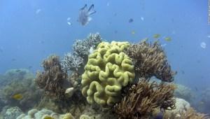 barrera-coral-australia