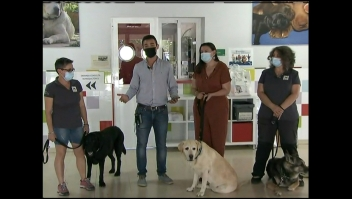 Así es el trabajo de perros que ayudan a personas con ceguera