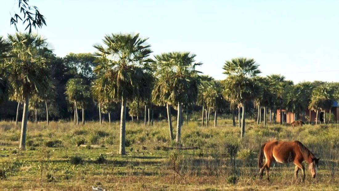 Piden reconocer como reserva el Bosque de Caraguatá, Argentina