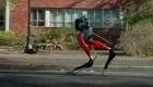 Cassie, el robot que puede correr cinco kilómetros