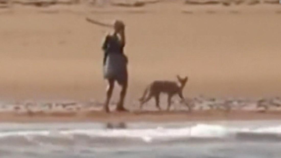 Mira a una mujer defenderse de un coyote con un palo