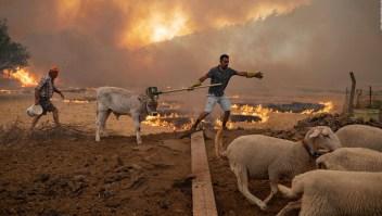 Históricos incendios forestales devastan ciudad turca